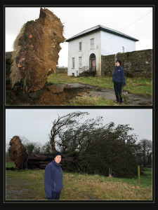Local archaeologist, Maggie Prendiville pictured at Kilmurry House with the fallen tree on Thursday. ©Photographs: John Reidy