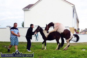 Cousins, Mikey Coffey (left) and Robert O'Brien pictured breeding their Skewbald ponies at St. Stephen's Park on Friday evening. ©Photograph: John Reidy