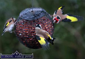 Feed the Birds 2
