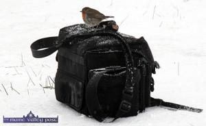 A Rough morning for The Robin. ©Photograph: John Reidy