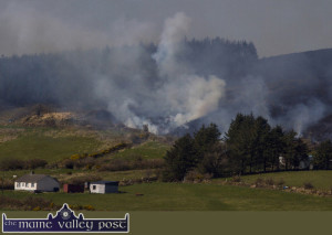 Too close for comfort: The gorse fire at Knockatee which was prevented from becoming a forest fire by Kerry and West Limerick units on Saturday. ©Photograph: John Reidy