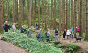 Visitors and hosts enjoying a trek through the impressive Glanageenty Wood.