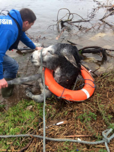 The lucky donkey and one of its heroic rescuers in before it was brought to Castleisland on Saturday evening.