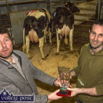 Kerry Holstein Friesian Breeders Club Show and Sale
