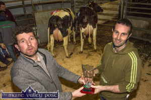 Kerry Holstein Friesian Breeders Club Show and Sale 24-3-2017