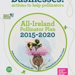 Tidy Towns Groups Urged to 'Get Buzzing' for Pollinators