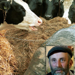 Healy Rae Calls on Minister Creed and Kerry Group to Help Farmers
