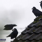 Met Éireann and the Crows Issue Warnings We Should Heed