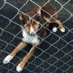 Stray Dog Safe and Well in Dooneen, Castleisland