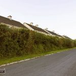 Out of Season Hedge and Tree Cutting Concerns Raised