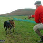 Lifting of Coursing Ban Welcomed by Healy Rae Brothers