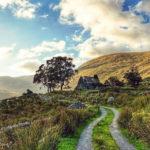 Castleisland Camera Club Feature Five: Sharon Mowat Driscoll