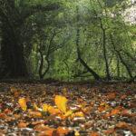 Castleisland Camera Club Feature Seven: Sheila Hanrahan