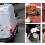 Garda Raid Makes Sense of Social Media Alarms on Stolen Dogs
