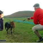 Deputy Michael Healy Rae to Oppose New Bill to Ban Hare Coursing