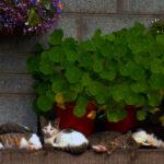 Veterinary Ireland Advice for Pet Owners Ahead of Fireworks Season