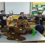 Science Foundation Ireland Award for Curranes N.S.