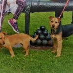 Help Needed:  Two Much Loved Doggies go Missing in Cordal !