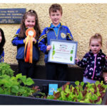 Loughfouder National School Project Grows to National Prizewinner